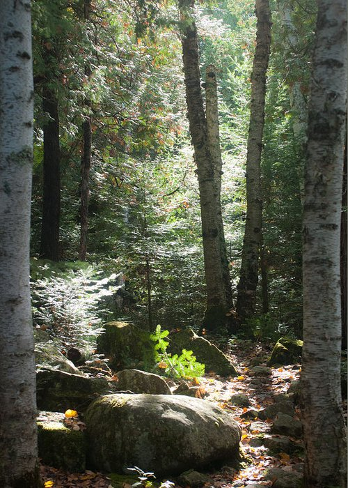 Forest Greeting Card featuring the photograph The Living Forest by Carl Young