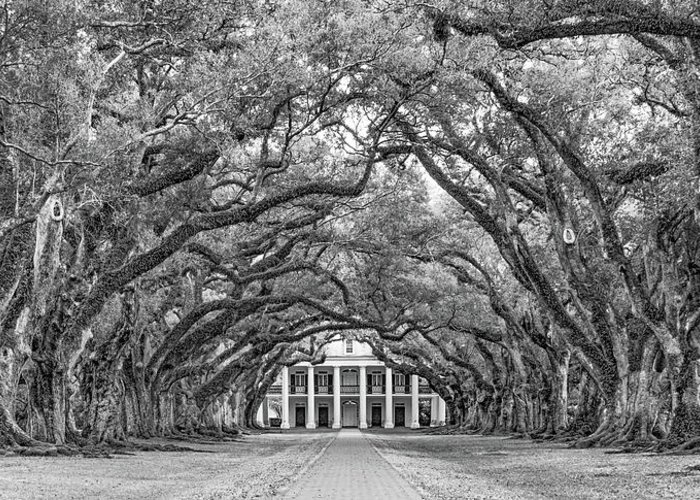Oak Alley Plantation Greeting Card featuring the photograph The Old South Version 3 Bw by Steve Harrington