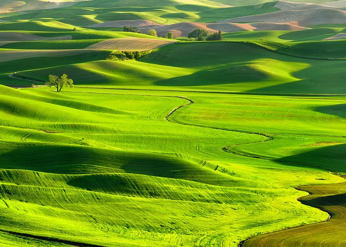 Scenics Greeting Card featuring the photograph The Palouse Rolling Hills by Justinreznick