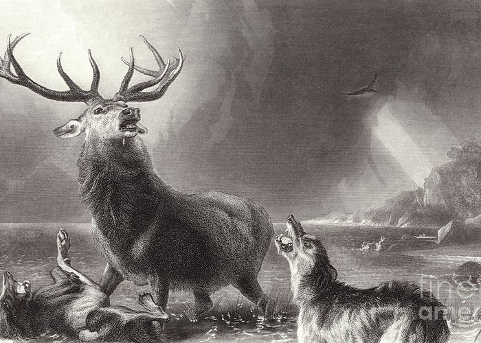 Landseer Greeting Card featuring the drawing The Stag At Bay by Edwin Landseer