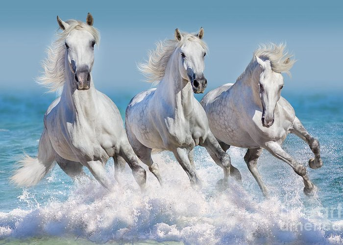 Stallions Greeting Cards