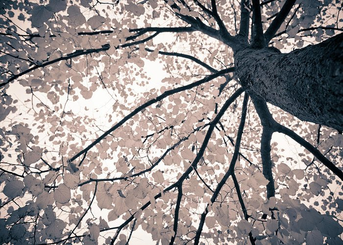 Spray Greeting Card featuring the photograph Tree Branches by Gianlucabartoli