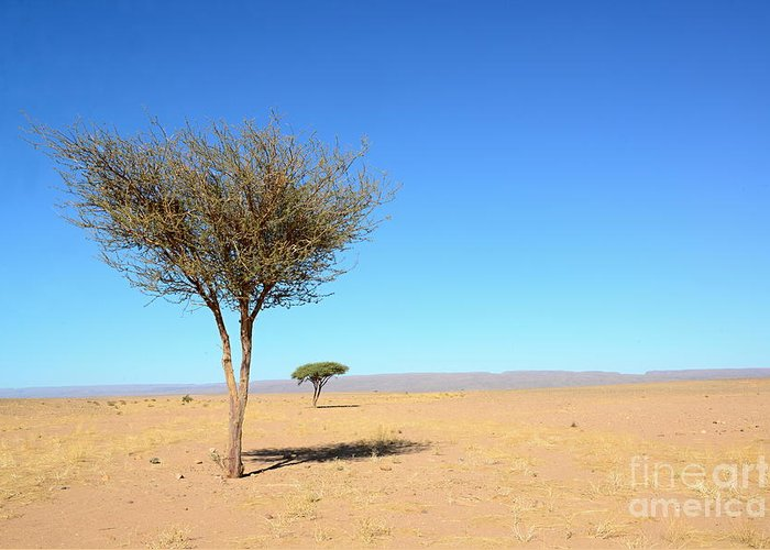 Rural Greeting Card featuring the photograph Tree In Sahara Desert In Morocco Near by Procyk Radek