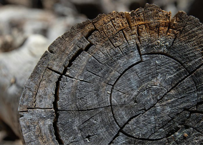 Tree Rings Greeting Card featuring the photograph Tree Rings by Fred DeSousa