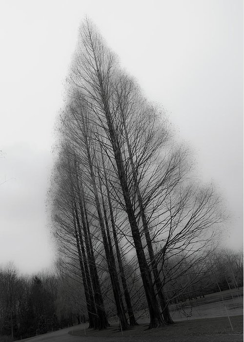Tranquility Greeting Card featuring the photograph Trees In Winter Without Leaves by Marie Hickman