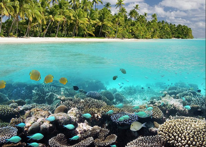 Underwater Greeting Card featuring the photograph Tropical Paradise - The Maldives by Steve Allen