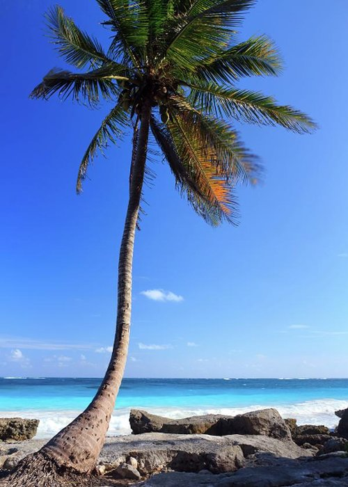 Scenics Greeting Card featuring the photograph Tulum Mexico Single Tree On Beach by Maria Swärd