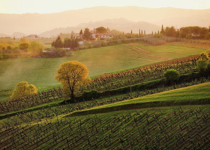 Scenics Greeting Card featuring the photograph Tuscan Vinyards by John And Tina Reid