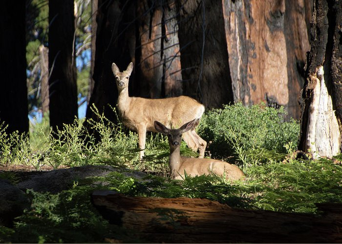 Deer Greeting Card featuring the photograph Two Deer by Carly Creley