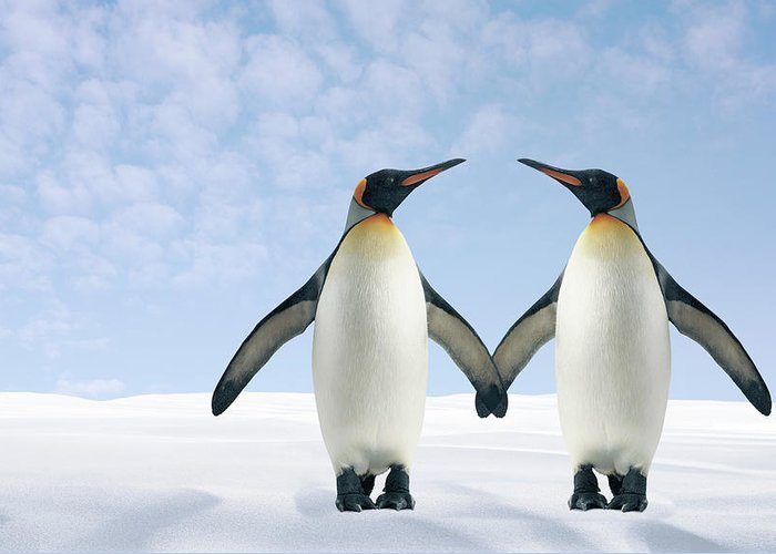 Animal Themes Greeting Card featuring the photograph Two Penguins Holding Hands by Fuse