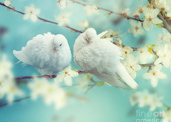 Love Greeting Card featuring the photograph Two White Pigeon On Flowering by Igoraleks