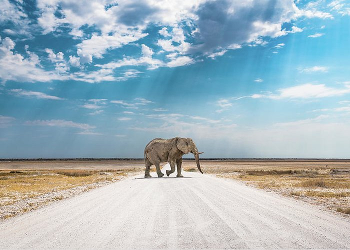 Elephant Greeting Card featuring the photograph Under An African Sky by Hamish Mitchell