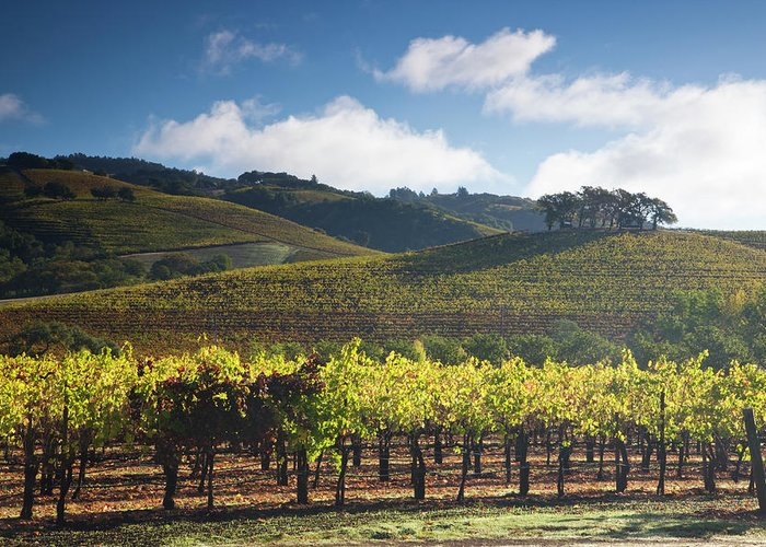 Sonoma County Greeting Card featuring the photograph Vineyards Autumn Time In Sonoma Valley by Darrell Gulin