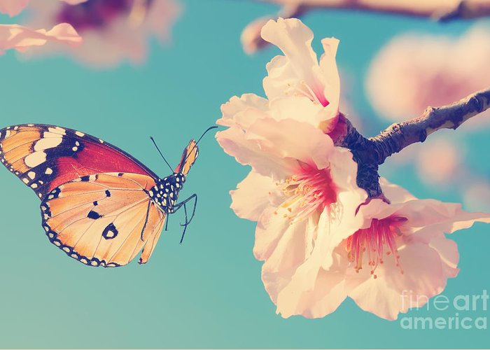 Flora Greeting Card featuring the photograph Vintage Spring Image With Butterfly And by Protasov An