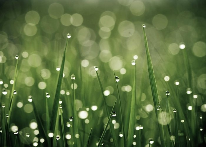 Grass Greeting Card featuring the photograph Water Drops On Grass by Florence Barreau