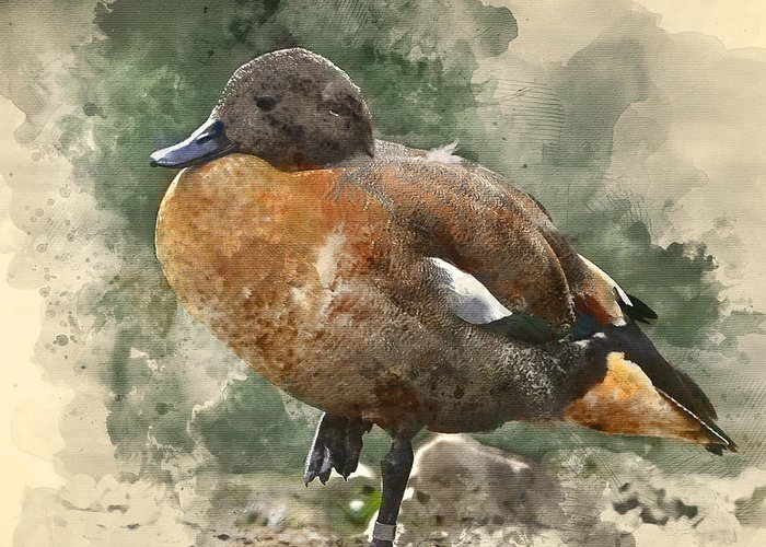 Waterfowl Greeting Cards