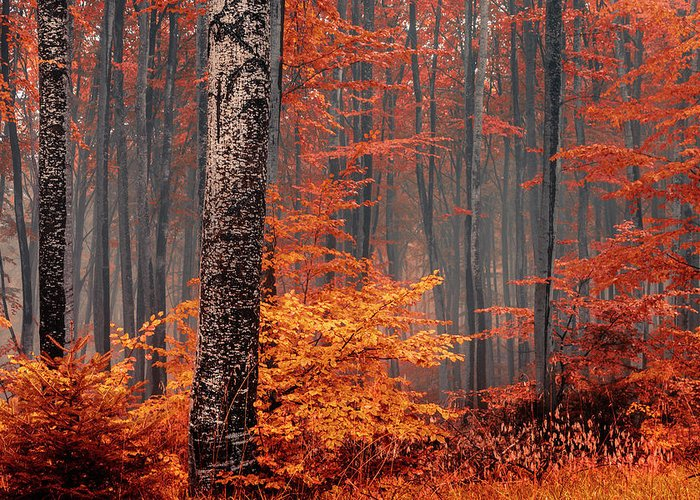Designs Similar to Welcome To Orange Forest