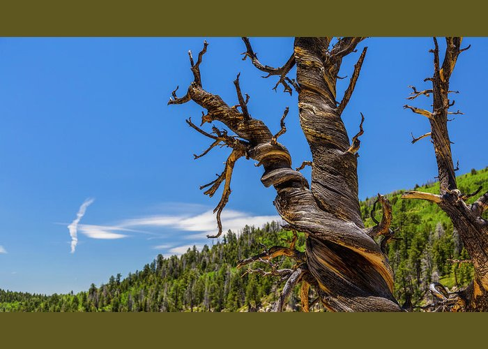 America Greeting Card featuring the photograph What You'd Expect To See by ProPeak Photography