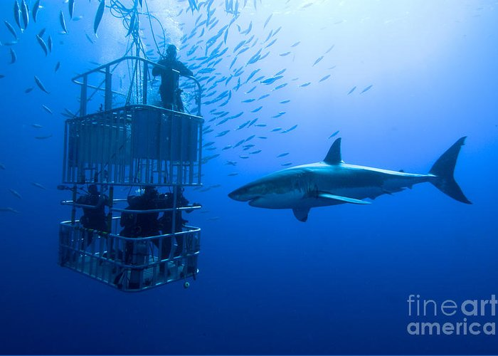 Big Greeting Card featuring the photograph White Shark Cage Great White Shark by Stefan Pircher