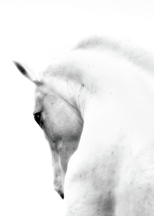 Horse Greeting Card featuring the photograph White Stallion Andalusian Horse Neck by 66north