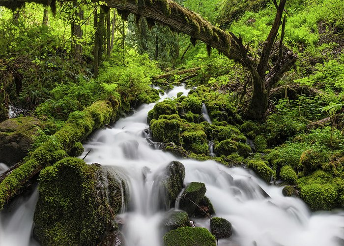 Scenics Greeting Card featuring the photograph Wild Forest Waterfall Idyllic Green by Fotovoyager