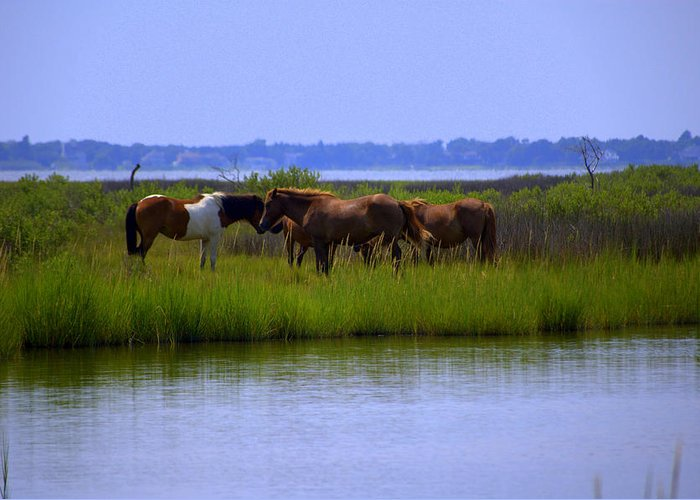Horse Greeting Card featuring the photograph Wild Horses Of Assateague Island by Robin Houde Photography