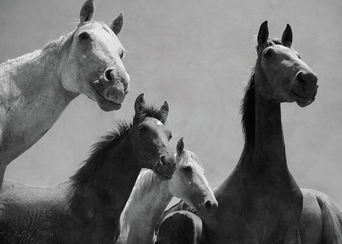 Horse Greeting Card featuring the photograph Wild Horses Portrait by Antonio Arcos Aka Fotonstudio Photography