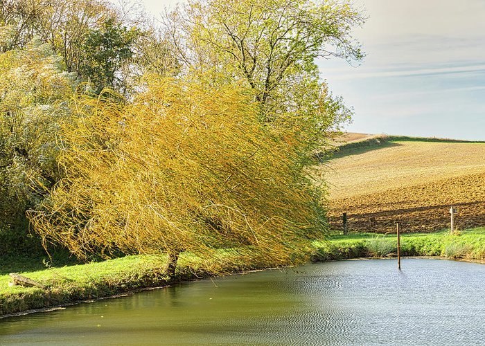 Wind Greeting Card featuring the photograph Wind In The Willow by Michael Briley