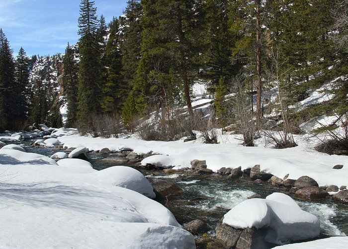 Creek Greeting Card featuring the photograph Winter Creek by Marie Leslie