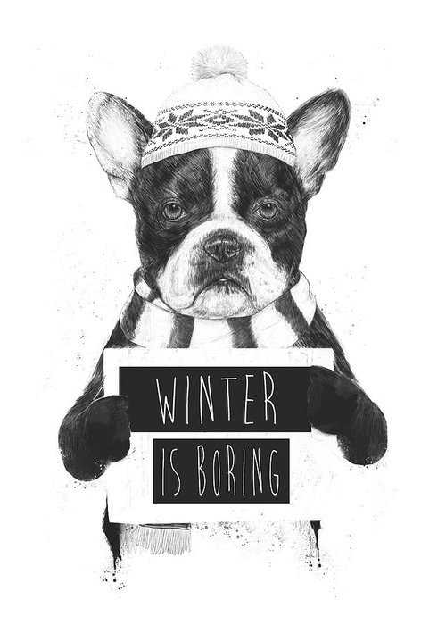 Dog Hat Greeting Cards