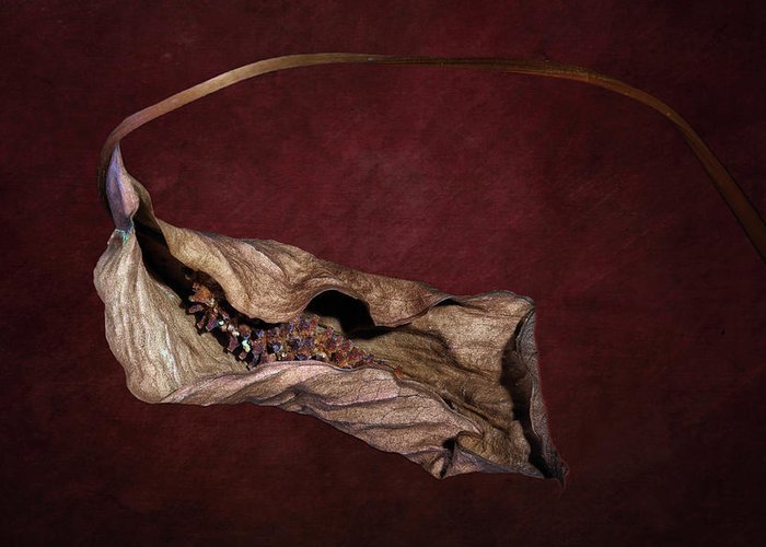 Botanical Greeting Card featuring the photograph Withered Beauty by Tom Mc Nemar