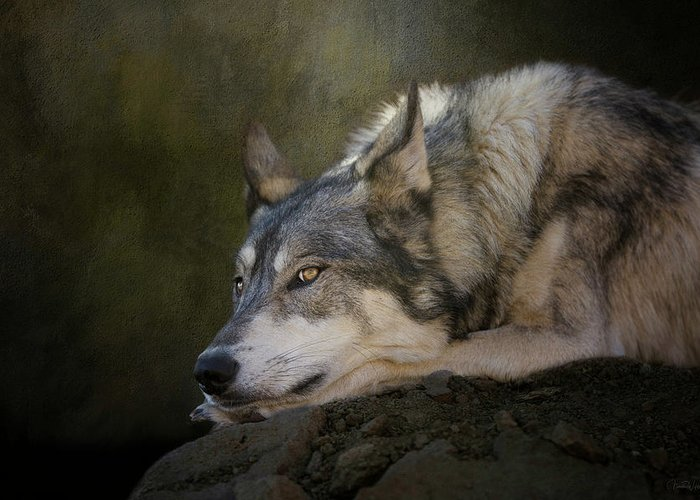 Wolf Greeting Card featuring the digital art Wolf Watch by Nicole Wilde