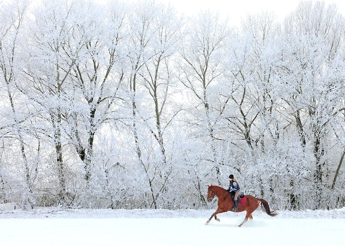 Horse In Motion Greeting Cards