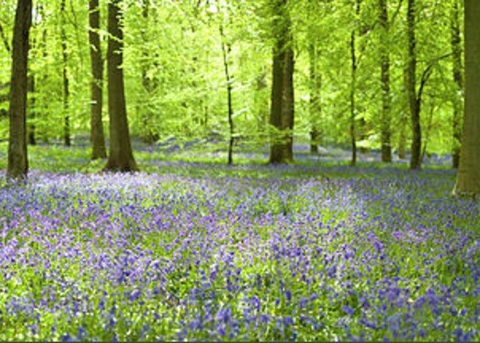Scenics Greeting Card featuring the photograph Wonderful Woodland by Pkfawcett