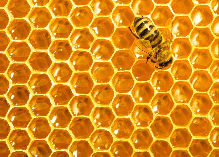 Bee Greeting Card featuring the photograph Working Bee On Honeycells by Studiosmart