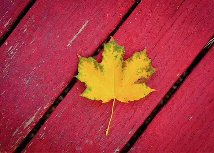 Outdoors Greeting Card featuring the photograph Yellow Maple Leaf Against A Red Deck by Photo By Sam Scholes