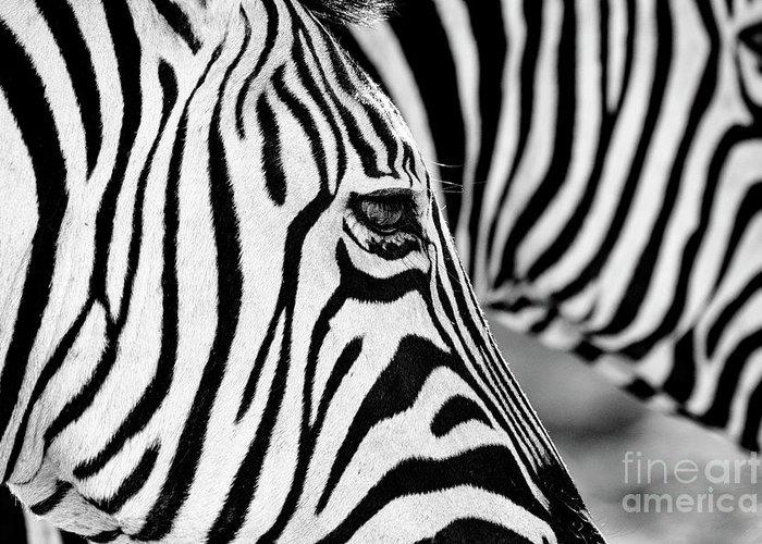 Animal Themes Greeting Card featuring the photograph Zebra Stripes by Chris Kolaczan