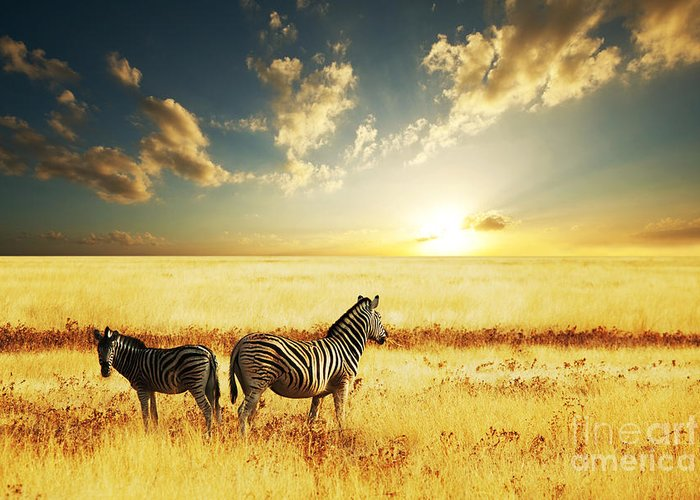 Zebra Greeting Card featuring the photograph Zebras At Sunset by Galyna Andrushko