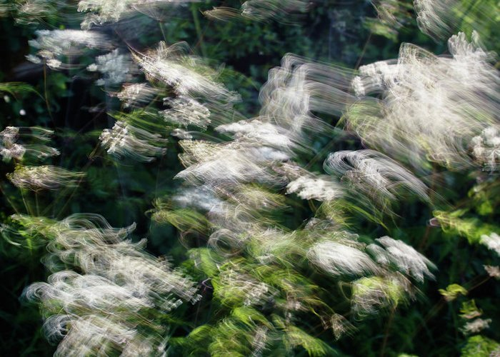 Hedgerow Greeting Card featuring the photograph Dancing Hedgerow by Bear R Humphreys
