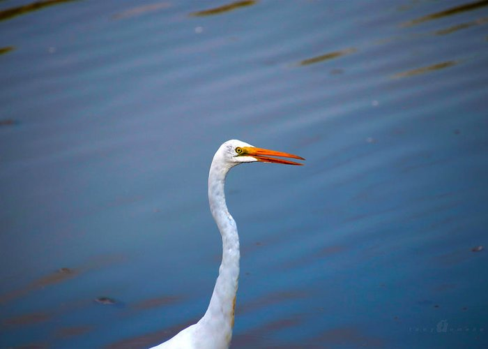 Greeting Card featuring the photograph Long Neck by Tony Umana