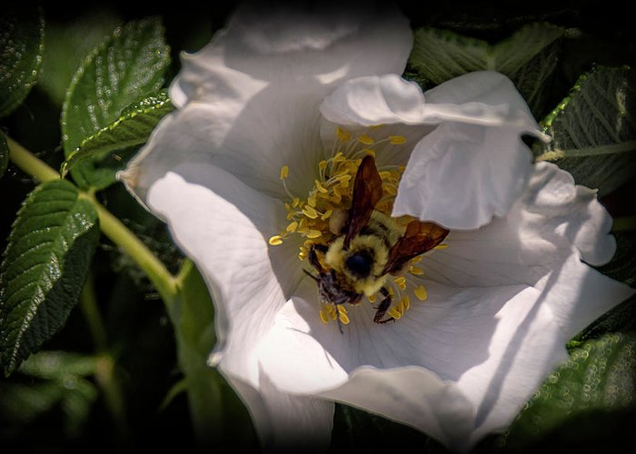 Insects Greeting Card featuring the photograph 20-0616-0555 by Anthony Roma
