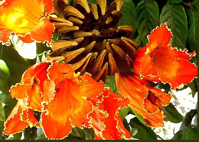 Hawaii Iphone Cases Greeting Card featuring the photograph African Tulip Tree by James Temple