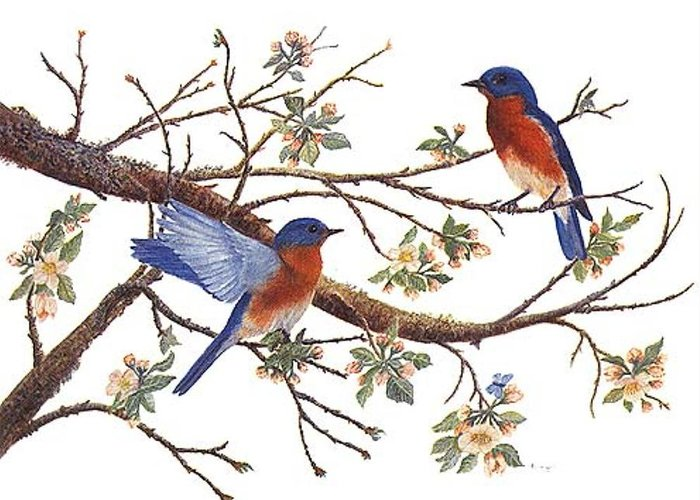 Bluebirds Greeting Card featuring the painting Bluebirds And Apple Blossoms by Ben Kiger