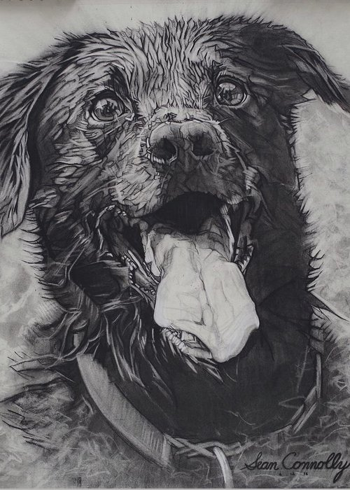Charcoal Pencil Greeting Card featuring the drawing Charlie Dog by Sean Connolly
