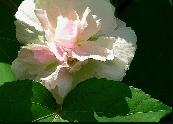 China Rose Greeting Card featuring the photograph China Rose 1 by James Temple