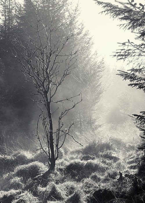 B/w Greeting Card featuring the photograph Dawn Mist Clearing by Bear R Humphreys