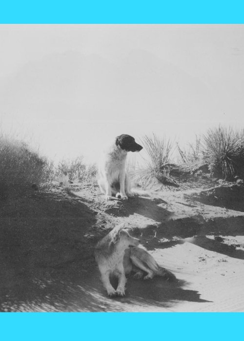 Mans Best Friend Greeting Card featuring the photograph Desert Dogs by Thomas Dans