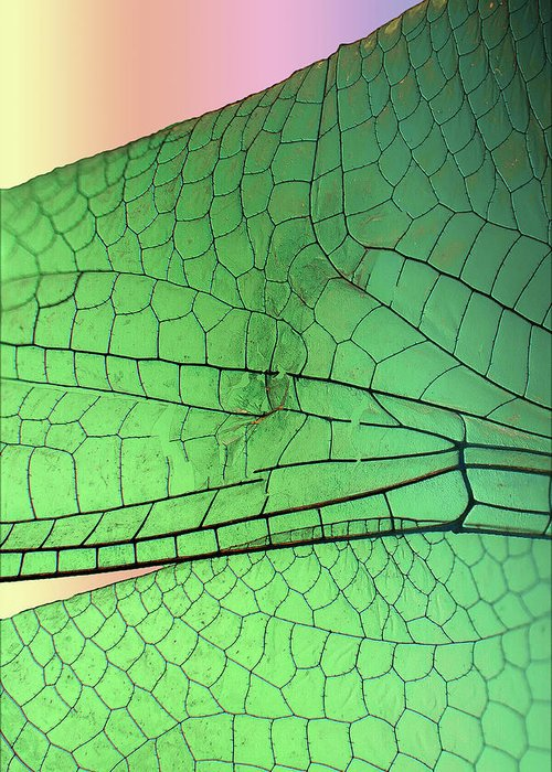 Macro Greeting Card featuring the photograph Dragonfly Wings 2 by Jim Painter