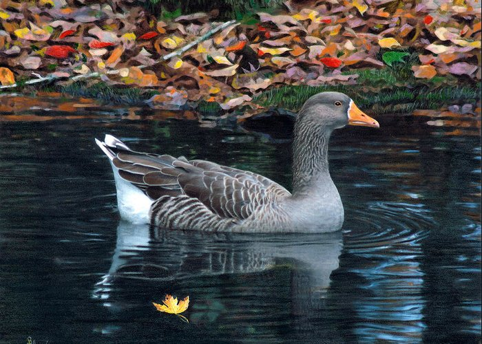 Bird Greeting Card featuring the drawing Great White-fronted Goose by Brent Ander