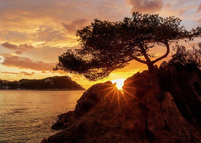 Lloret Greeting Card featuring the photograph Lonely Tree At Sunrise On The Beach Of Fenals, Lloret De Mar by Vicen Photography